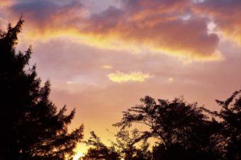 秋の物悲しさはどこからくるのでしょうか~東洋医学とアロマテラピーの話~