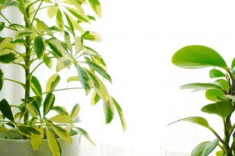 お部屋に緑葉植物、いかがですか?~空気を浄化して健康な生活を~