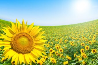 夏がはじまります!!~体力維持と疲労回復食材で楽しく過ごしましょう~