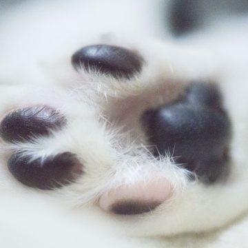 動物病院や動物保護団体施設への出張施術について~お手伝いさせてください~